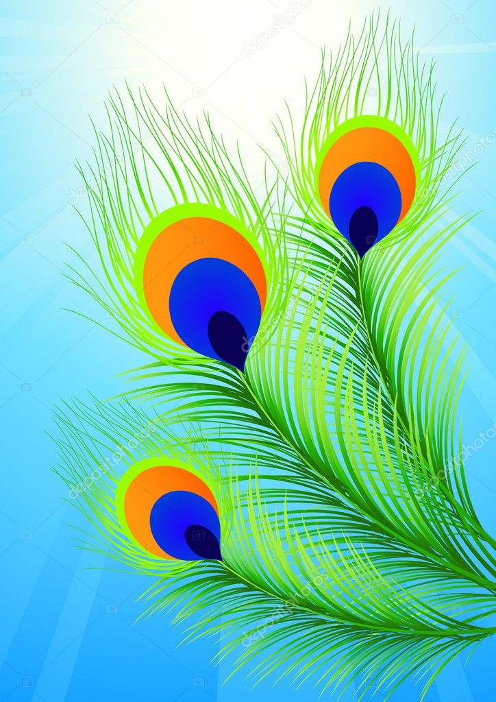 Peacock Feather Vector Graphic Peacock Feather Vector