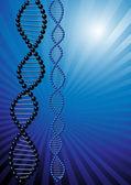 DNA — Stock Vector