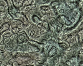 Alien skin texture — Stock Photo