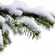 Christmas evergreen spruce tree with fresh snow on white — Stock Photo #3581674