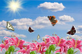 Pink lilies and a butterflies — Stock Photo