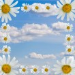 Stock Photo: Frame of daisies