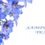 Blue flower — Stock Photo #3611519