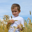 Boy walks on the wheat field — Stock Photo