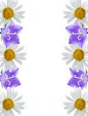 Border of flowers — Stock Photo