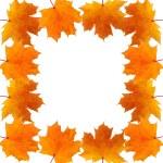 Frame of autumn maple leaves — Stock Photo