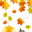 Maple leaves and pumpkins — Stock Photo