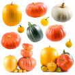 Collection of colorful pumpkins — Stock Photo