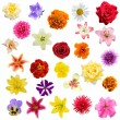 Stock Photo: Big collage from flowers