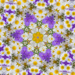 Kaleidoscope with chamomiles and campanulas — Stock Photo