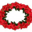 Christmas wreath from poinsettia — Stock Photo #3821703