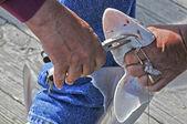 Pesca de tiburón — Foto de Stock