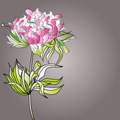 Paeonia flowers — Stock Vector