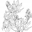 Vector de stock : Sketch with Iris flowers