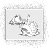Sketch with snail — Stock Vector