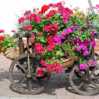Flowers handcart — Stock Photo