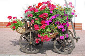 Flowers handcart — Stock Photo