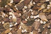 Morel mushroom — Stock Photo