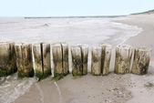 Baltic sea groins — Stock Photo