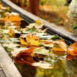 Stock Photo: Autumn day backgroung image f