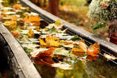 Autumn day backgroung image f — Stock Photo