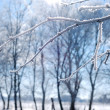 Frosty morning — Stock Photo