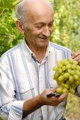 üst düzey winegrower — Stok fotoğraf