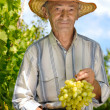 Royalty-Free Stock Photo: Senior winegrower