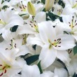 White lilies — Stock Photo #3773276