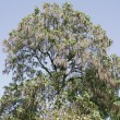 Stock Photo: Treetop