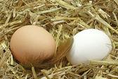 Uova nel nido — Foto Stock