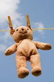 Teddy on a clothesline — Stock Photo