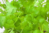 Close-up of coriander — Stock Photo