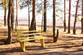 Bench and pines — Stock Photo