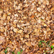 Royalty-Free Stock Photo: Dry leaves