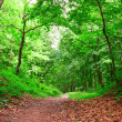 Stock Photo: Path in the forest