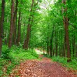 Path in forest — Stock Photo #3325634