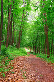 Path in forest — Stock Photo