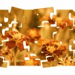 Graphic art with tagetes flowers theme - Stock Photo