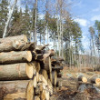 Deforestation arewith pile of logs — Stock Photo #2753520