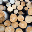 Logs in deforestation aretexture — Stock Photo #2753549