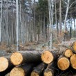 Deforestation arein forest — Stock Photo #2753567