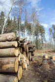 Deforestation area with pile of logs — Stock Photo