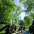 Bridge in green park in summer — Stock Photo
