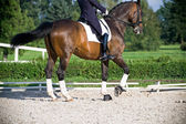 Horse dressage outdoors in nature — Stock Photo