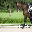 Horse dressage in summer — Stock Photo #3798587