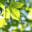 Stock Photo: Tree branch with green leaves