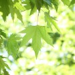 Tree branch with green leaves — Stock Photo #3302943