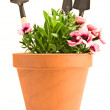 Garden tools — Stock Photo #3081024