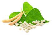Kidney beans — Stock Photo